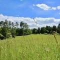 Rolling fields of the battlefield.- Manassas National Battlefield Park