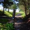 First Manassas Trail.- Manassas National Battlefield Park