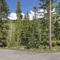 Large pine trees provide great shade.- Ledgefork Campground