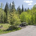 Many campsites are surrounded by trees.- Ledgefork Campground