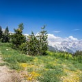 After making your way back down the mountain, a 1-mile hike takes you to the flora and views of Alta Meadow.- Alta Peak