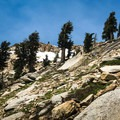Once you get above 10,500 feet, gnarled foxtail pines dominate the landscape.- Alta Peak