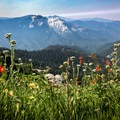If you tackle this trail in late spring/early summer, the wildflowers put on a fabulous show.- Alta Peak