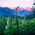 The wildflowers and the sunsets make this a magical backpacking excursion.- Alta Peak