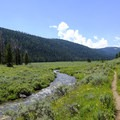 Bacon Rind Creek runs through a wide meadow that is frequented by wolves and bears.- Bacon Rind Creek
