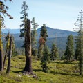 The Twin Lakes Trail in Lassen Volcanic National Park.- Twin Lakes Loop