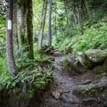 Follow the infamous white Appalachian Trail blaze along the way.- Appalachian Trail: Newfound Gap to Charlie's Bunion