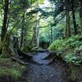 The Appalachian Trail.- Appalachian Trail: Newfound Gap to Charlie's Bunion