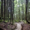 During the 4 miles of trail to Charlie's Bunion, you'll be treated to views and fairy-tale forests.- Appalachian Trail: Newfound Gap to Charlie's Bunion