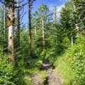 The trail approaching Charlie's Bunion.- Appalachian Trail: Newfound Gap to Charlie's Bunion