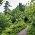 This smooth section of the trail is a sign that you're almost there!- Appalachian Trail: Newfound Gap to Charlie's Bunion