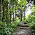 The Appalachian Trail is filled with tranquility and magic. After your first mile, you'll be hooked for life.- Appalachian Trail: Newfound Gap to Charlie's Bunion