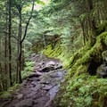 Moss-lined sections of the trail will make you forget the crowd that you left behind at Newfound Gap.- Appalachian Trail: Newfound Gap to Charlie's Bunion