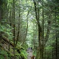 Get lost in the Smokies; you might just find yourself.- Appalachian Trail: Newfound Gap to Charlie's Bunion