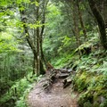 While on the Appalachian Trail, take a moment to think of the thousands that have shared the same trail.- Appalachian Trail: Newfound Gap to Charlie's Bunion