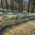 Trail near Wildcat Creek.- North Rim Hike: Big Oak Flat Road to Mirror Lake