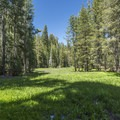 Ribbon Meadow.- North Rim Hike: Big Oak Flat Road to Mirror Lake