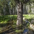 Flooded Eagle Peak Meadow.- North Rim Hike: Big Oak Flat Road to Mirror Lake