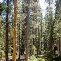 The Lukens Lake Trail in Yosemite National Park.- Ten Lakes