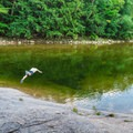 Swimmer diving off the rocks at a deeper area.- Lady's Bathtub Swimming Area
