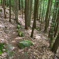 Trail leading down to the river.- 20 Foot Hole