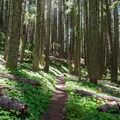The trail is pretty level most of the way to the lakes.- Erma Bell Lakes