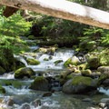The creek flowing by the campsites.- Skookum Creek Campground