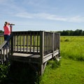There are raised platforms with fixed binoculars for viewing wildlife.- Five Rivers Environmental Education Center