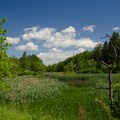 A shoreline view of one of the many ponds.- Five Rivers Environmental Education Center