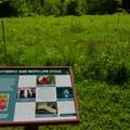 A milkweed patch along an interpretive trail.- Five Rivers Environmental Education Center