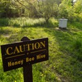 There are a couple of bee hive sites that are maintained in order to promote the bee population as well as keep the flowers and apple trees pollinated.- Five Rivers Environmental Education Center