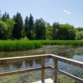 The view across one of the ponds from a viewing platform.- Five Rivers Environmental Education Center