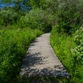 A walkway over a marsh area.- Ooms Conservation Area at Sutherland Pond