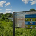 Information on what lives in the pond.- Ooms Conservation Area at Sutherland Pond