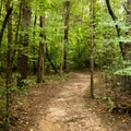 Bald Eagle Trail.- Bald Eagle Trail
