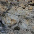 Stromatolites, sedimentary rock layers formed by microorganisms.- Siyeh Creek to St. Mary's Lake via Reynolds Creek