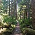 Pamelia Lake Trail.- Hunts Cove + Coyote Lake Loop