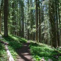 The trail to Otter Lake in the Three Sisters Wilderness.- Otter Lake