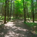 The trail is wide and surrounded by open forest.- Vroman's Nose