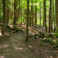The trail crosses old property boundary walls.- Vroman's Nose