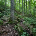 A section of trail.- Burnt Rock Mountain via Hedgehog Brook Trail
