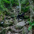The steep rock and rugged root-laced trail.- Burnt Rock Mountain via Hedgehog Brook Trail