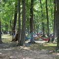 Hammocks all over the picnic area.- Leesylvania State Park