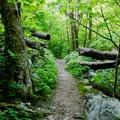 Cedar Run Trail.- Whiteoak Canyon + Cedar Run Circuit