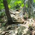 The steep incline of Whiteoak Canyon Trail.- Whiteoak Canyon + Cedar Run Circuit