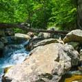 Swift moving stream down Whiteoak Canyon.- Whiteoak Canyon + Cedar Run Circuit