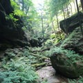 Conkle's Hollow has some of the thickest and diverse plant life in the park.- Hocking Hills State Park
