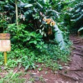 A signed junction at the beginning of the trail.- Kolowalu Trail