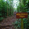 The trail is well marked and easy to follow.- Kolowalu Trail