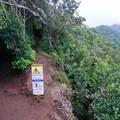 The top of the ridge is a trail junction with Wa'ahila Ridge.- Kolowalu Trail